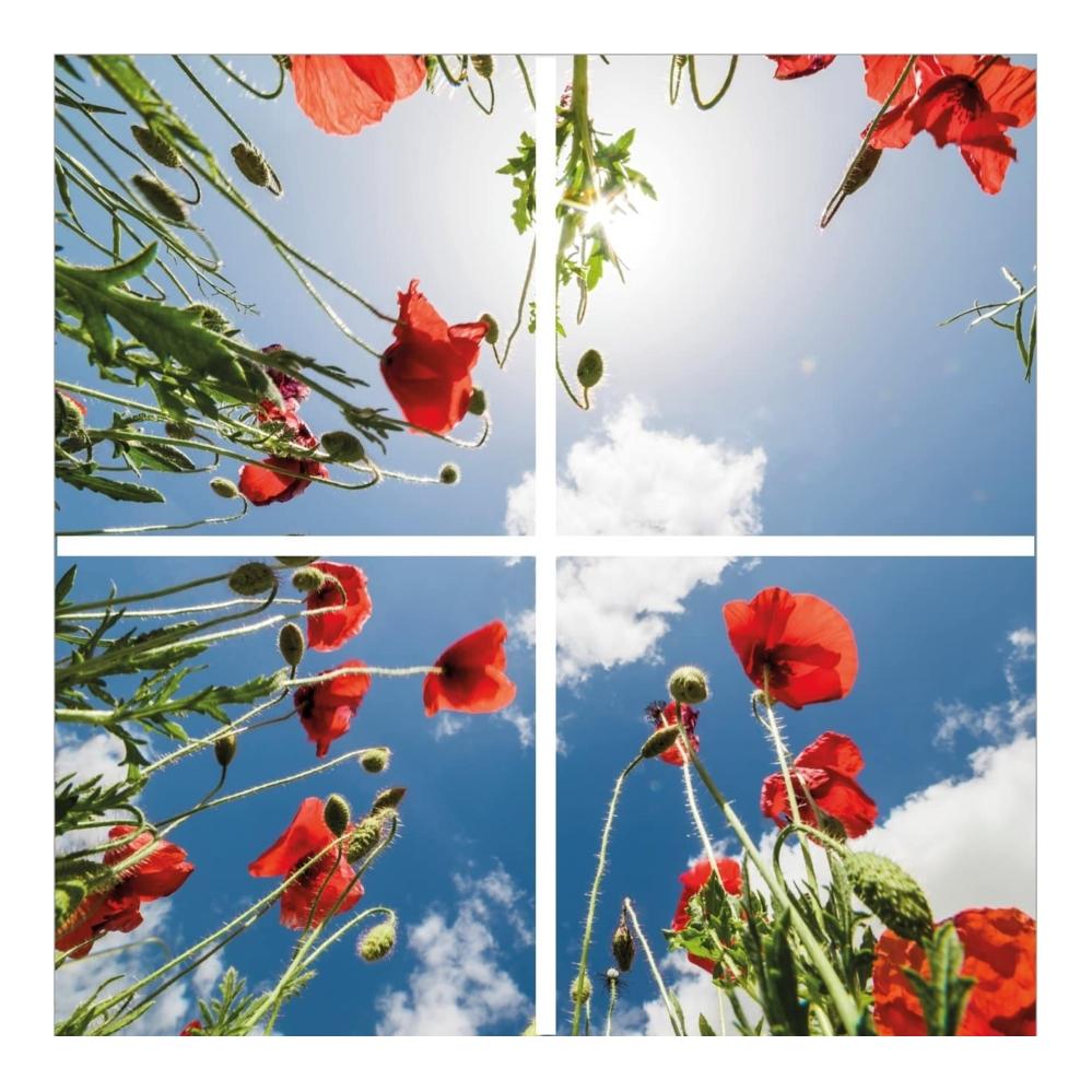 Fotoprint- klaprozen- 595 x 595- verdeeld over 4 panelen
