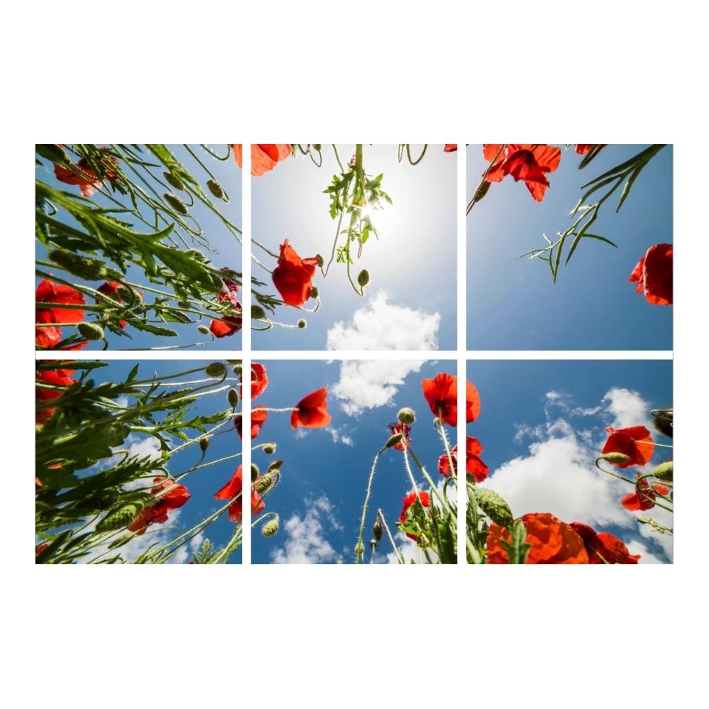 Fotoprint- klaprozen- 595 x 595- verdeeld over 6 panelen
