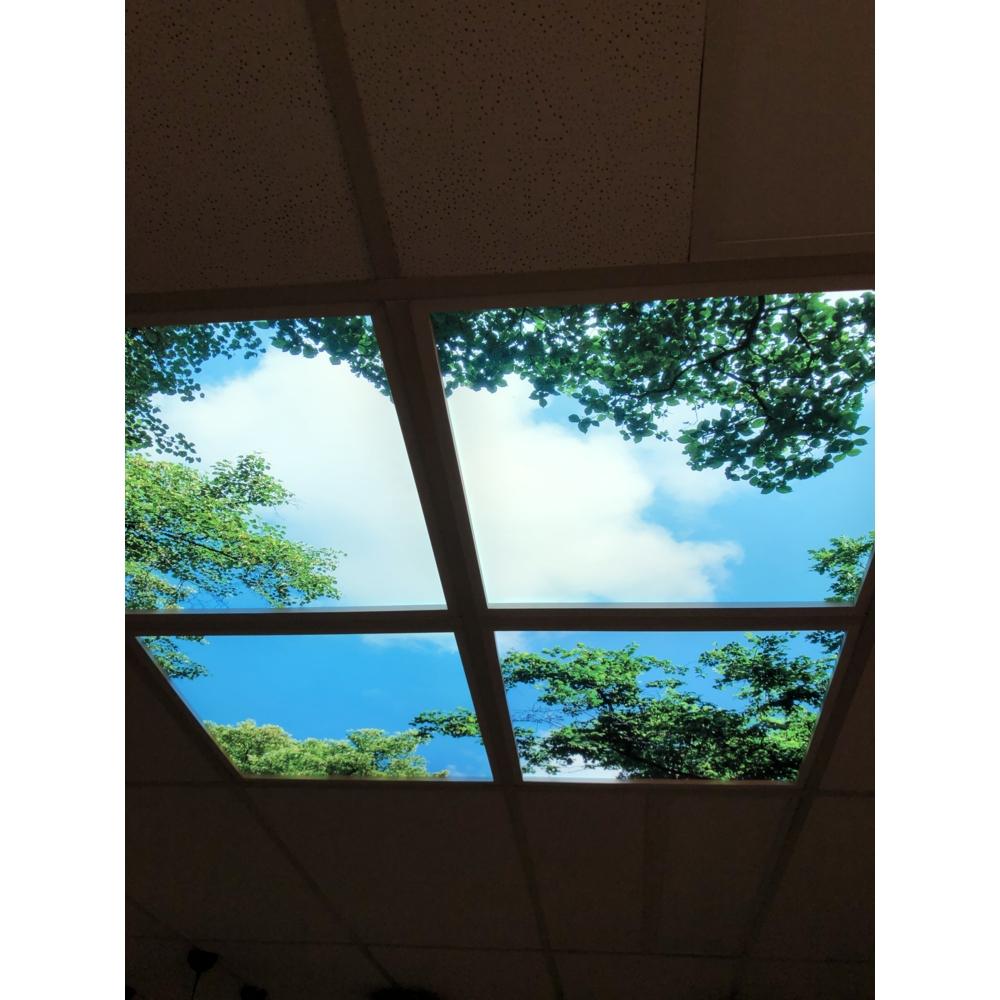 Bos wolken plafond - Wolkenbos plafond - acrylplaat