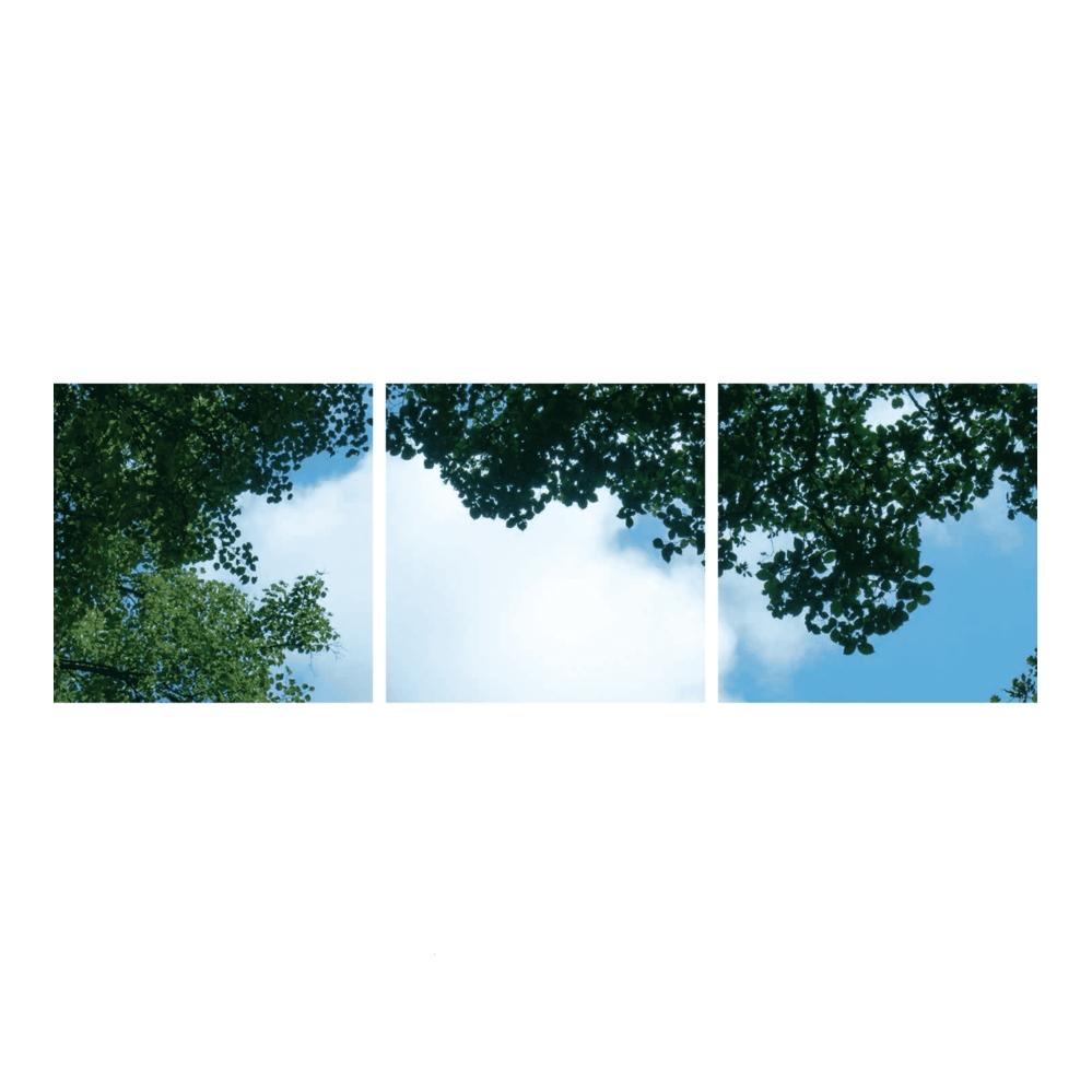 bos- wolken-fotoprint- verdeeld over 3 panelen- 595x595